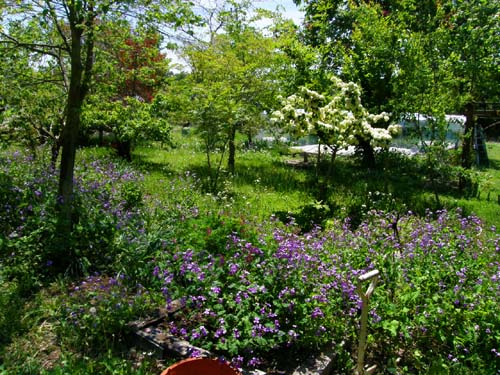 南八ヶ岳の庭園_d0127634_10564979.jpg