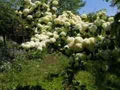 南八ヶ岳の庭園_d0127634_1114112.jpg