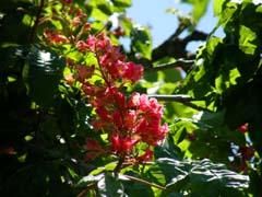 南八ヶ岳の庭園_d0127634_1115540.jpg