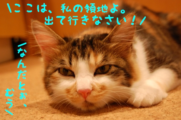 c0181639_055302.jpg