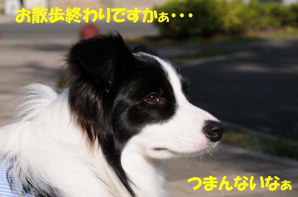 c0147241_0452754.jpg