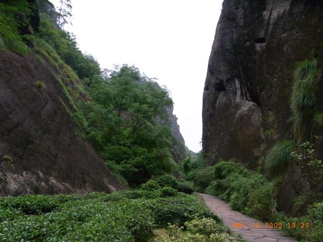 武夷山は良い旅!!_f0070743_15412156.jpg