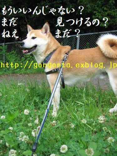 e0085147_12332613.jpg