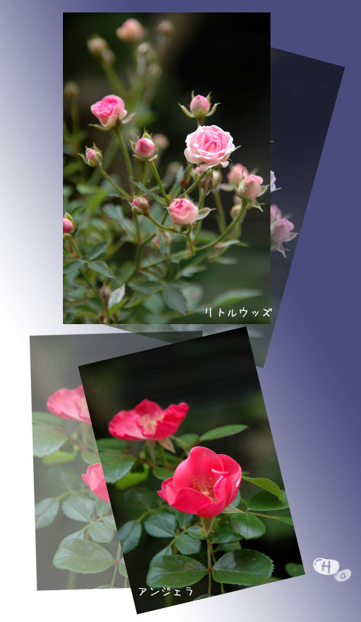e0020954_20544928.jpg