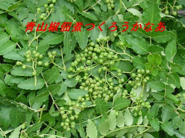 f0179357_10353955.jpg