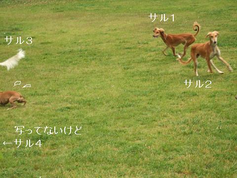 f0158862_195382.jpg