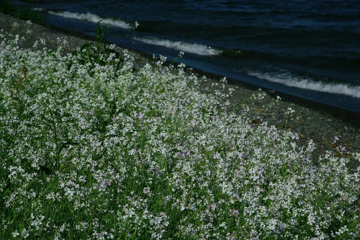 琵琶湖景  3_f0021869_22502169.jpg