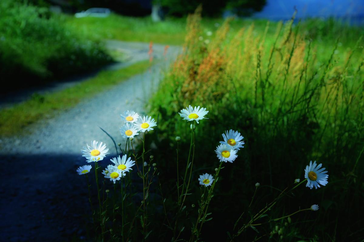 琵琶湖景  3_f0021869_22504854.jpg