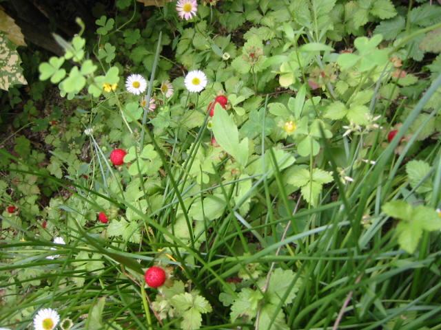 strawberryfields forever_f0200380_0121965.jpg