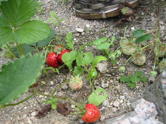 strawberryfields forever_f0200380_3272950.jpg