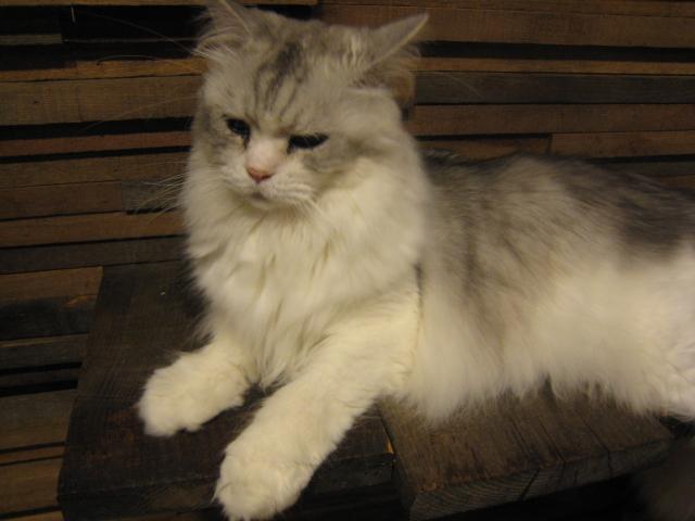 猫の時間 撮影_b0137082_110730.jpg