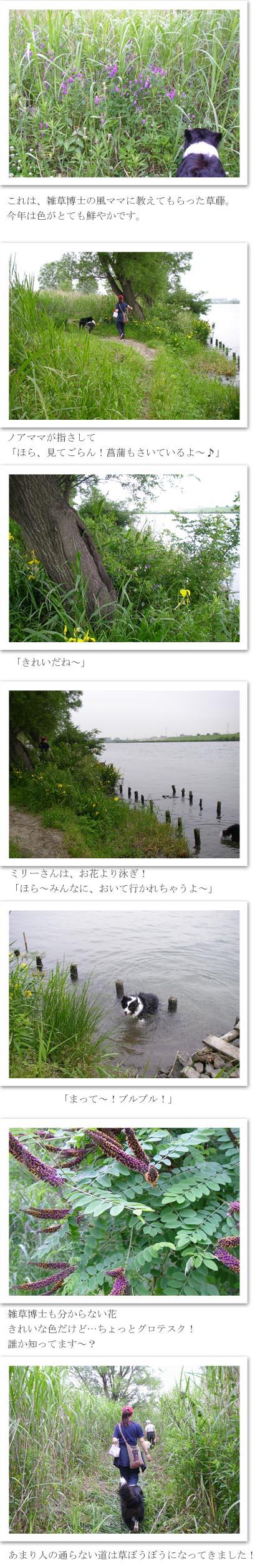 f0114893_921658.jpg