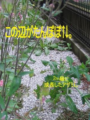 b0181615_1455298.jpg