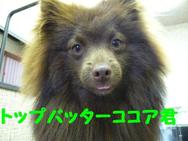 遊びたぁ~~~い!!_b0130018_12213869.jpg