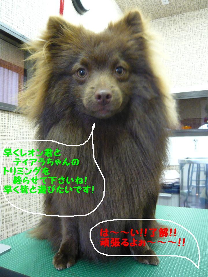 遊びたぁ~~~い!!_b0130018_12221884.jpg