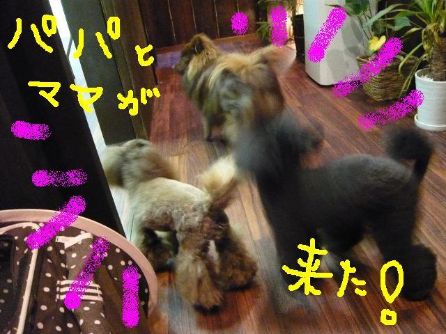 遊びたぁ~~~い!!_b0130018_12252417.jpg