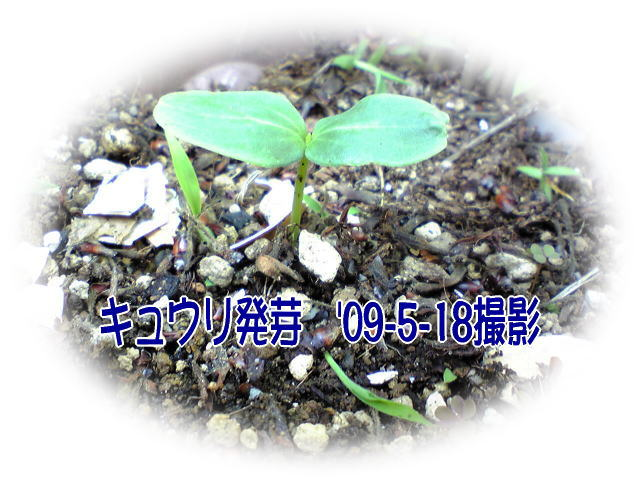 a0021421_1912475.jpg
