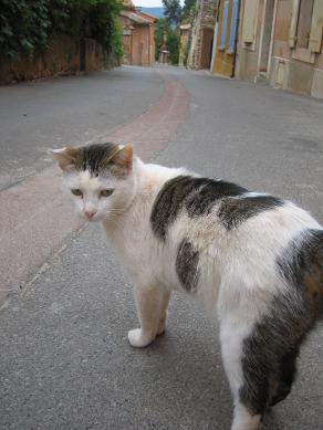 Roussillon_f0150936_16524069.jpg