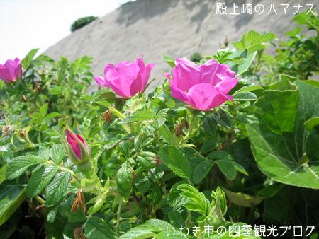 f0105342_16354322.jpg