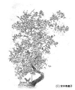木精占い♪_c0156749_10323626.jpg