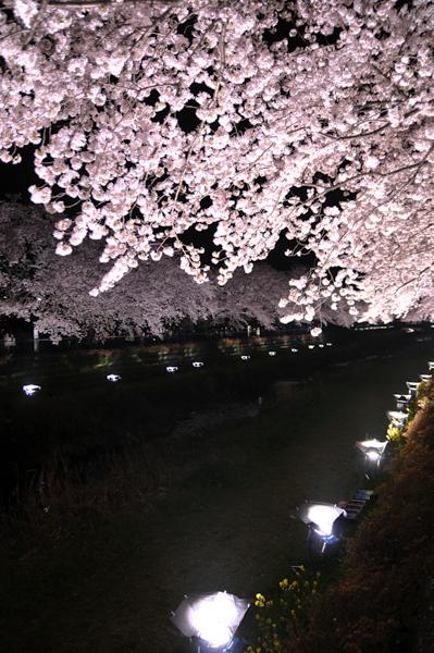 野川の夜桜 2009_a0003650_22454064.jpg