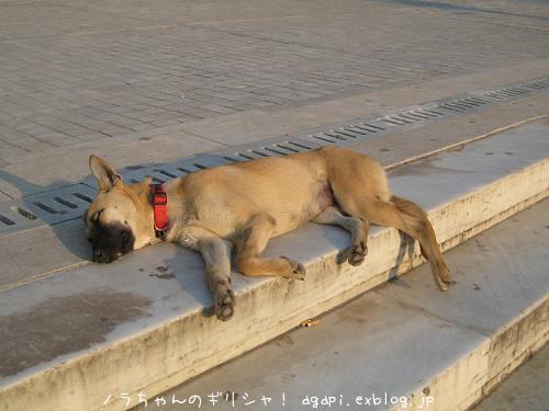 セルフ散歩中に博物館前で昼寝するワンちゃん_f0037264_0402523.jpg