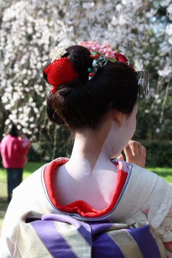 桜回想に~夢一夜_b0055171_14281834.jpg