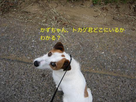 c0179472_17221483.jpg