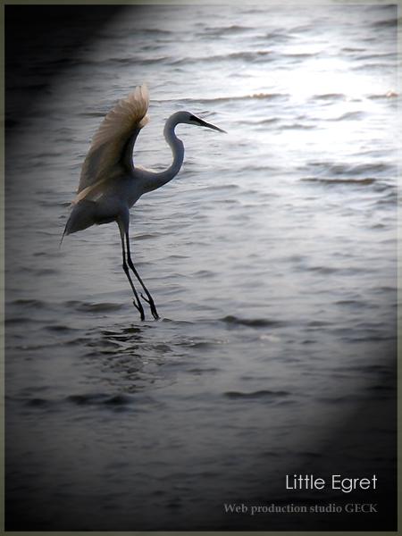 Graceful dance ・・・_d0147591_7215224.jpg
