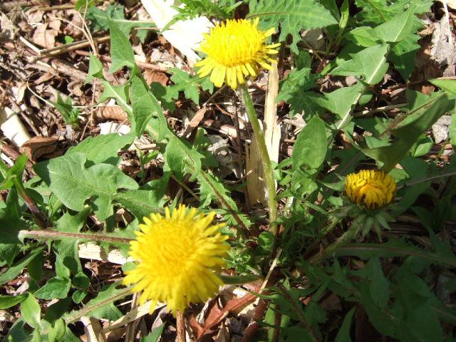 金時山の花 Vol.53_e0024094_12291912.jpg