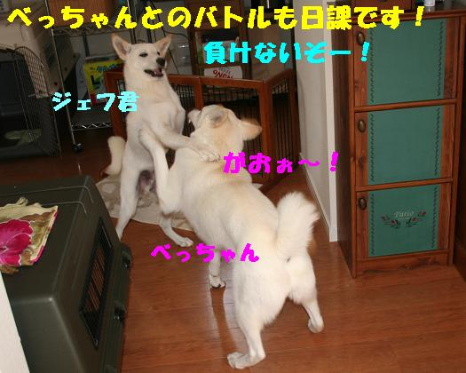 f0121712_12583861.jpg