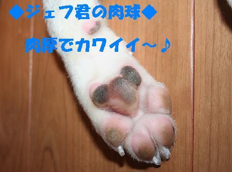 f0121712_135272.jpg