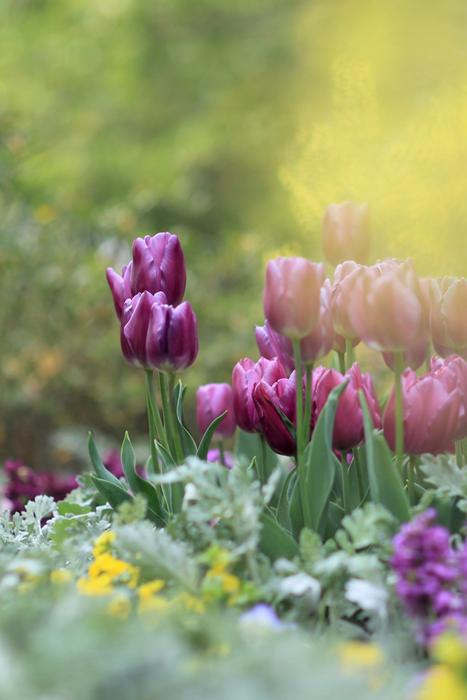 4月18日(土) 晴れ 楽しい一日でした(追加あり)_e0155629_20323936.jpg
