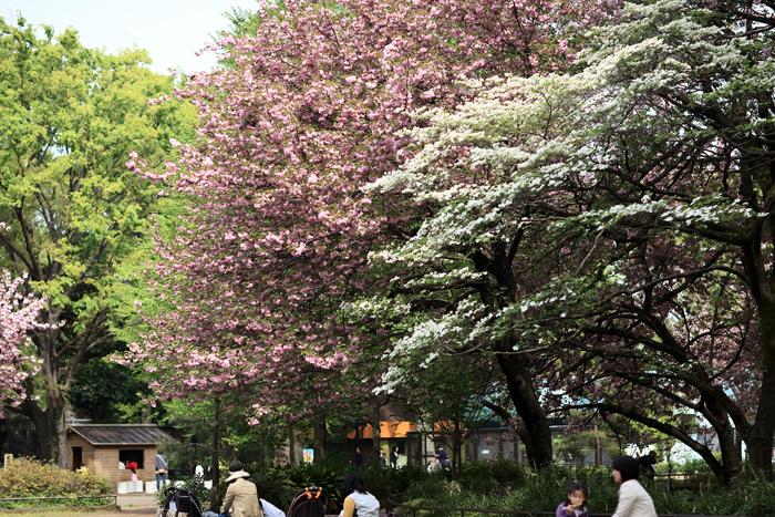 4月18日(土) 晴れ 楽しい一日でした(追加あり)_e0155629_20423483.jpg