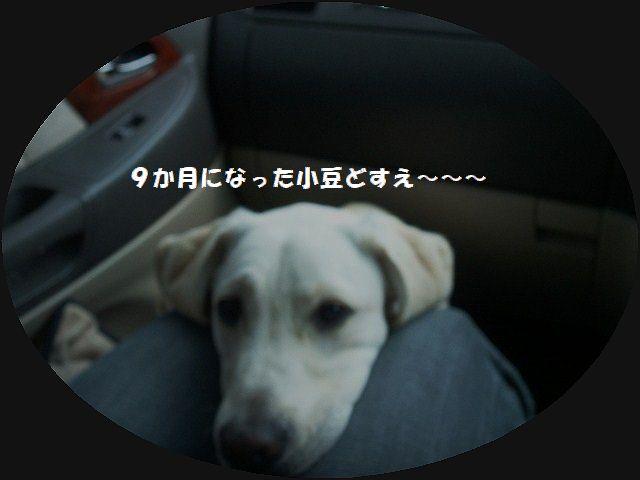 b0127531_20954100.jpg