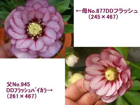 c0025140_1050322.jpg