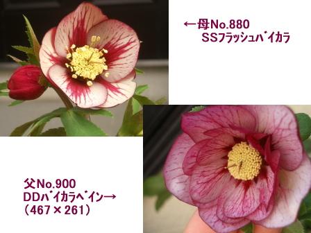 c0025140_10515278.jpg