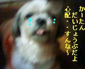 a0108346_5582136.jpg