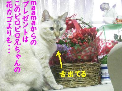 b0151748_22325491.jpg