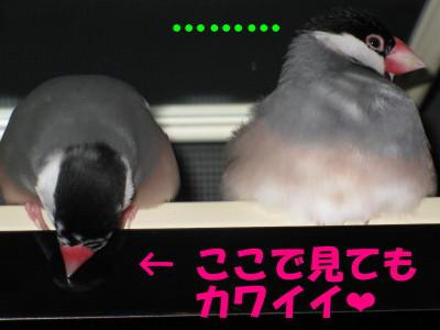b0158061_19442399.jpg