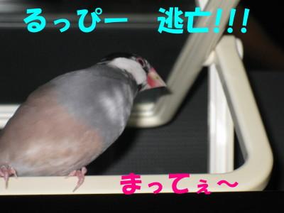 b0158061_19555535.jpg