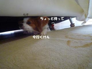 b0170863_1415178.jpg