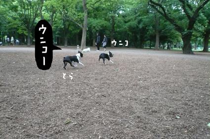 f0170072_034927.jpg