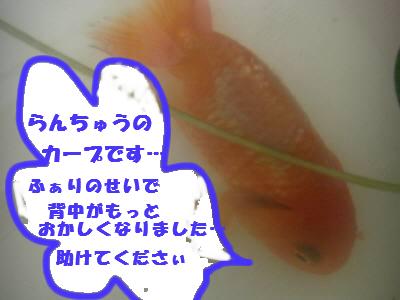 b0183076_1638524.jpg