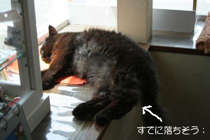 ゴマ爆睡中!_d0071596_17432092.jpg