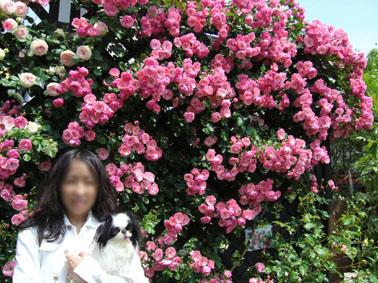 忘れられない香り_a0111125_21475785.jpg