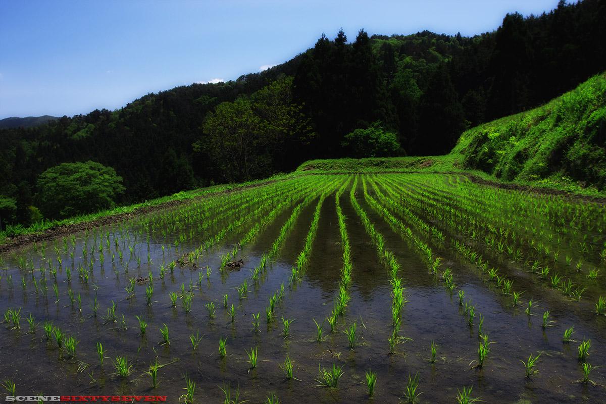 「畑」の棚田_f0004525_923770.jpg