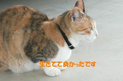 f0114128_1848641.jpg