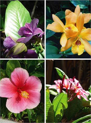 ハワイで出逢った花たち_b0035734_20504447.jpg