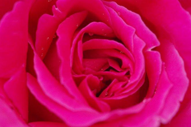薔薇の香りにつつまれて。。。_e0171336_21294975.jpg